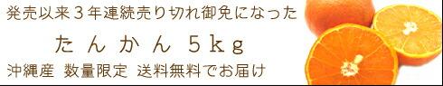 たんかん5kg