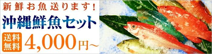 沖縄鮮魚!送料無料3000円より