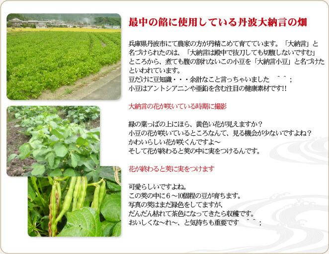 最中の餡に使用している丹波大納言の畑。兵庫県丹波市にて農家の方が丹精こめて育てています。「大納言」と名づけられたのは、「大納言は殿中で抜刀しても切腹しないですむ」ところから、煮ても腹の割れないこの小豆を「大納言小豆」と名づけたといわれています。小豆はアントシアニンや亜鉛を含む注目の健康素材です