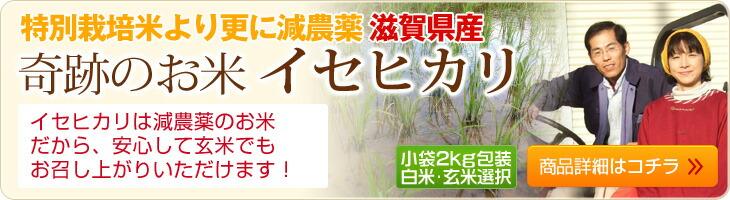 イセヒカリは農薬不使用の玄米だから、安心して玄米で食べていただけます!