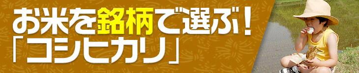 お米を銘柄で選ぶ!コシヒカリ