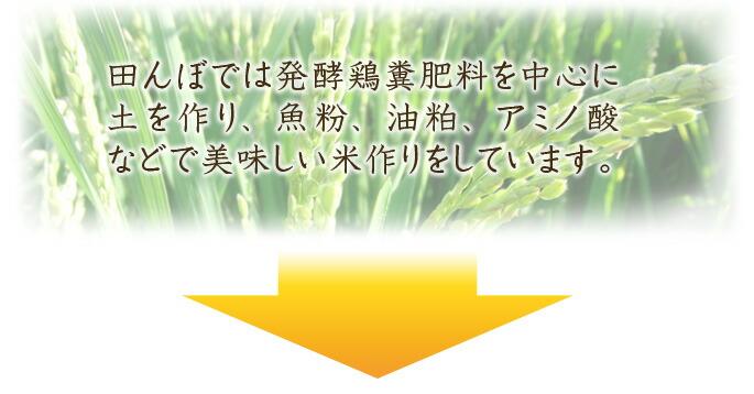 田んぼでは発酵鶏糞肥料を中心に土を作り、魚粉、油粕、アミノ酸などで美味しい米作りをしています