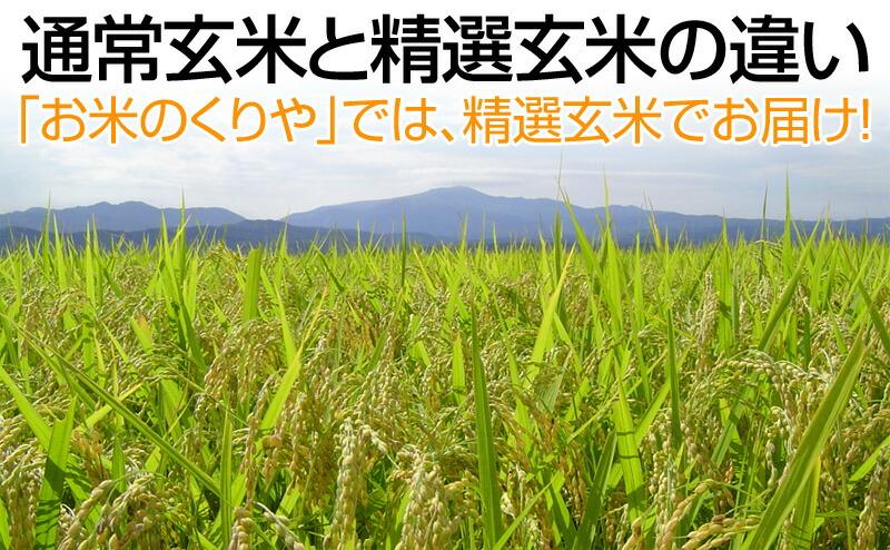 通常玄米と精選玄米の違い
