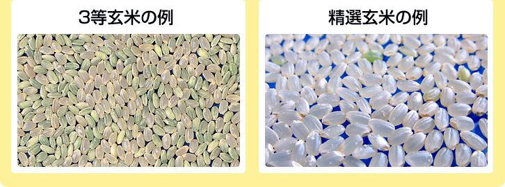 3等玄米と精選玄米の例