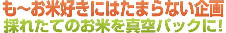 も~お米好きにはたまらない企画 採れたてのを毎月お届け!