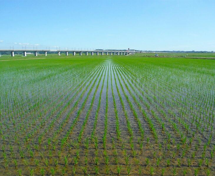 田園風景写真1