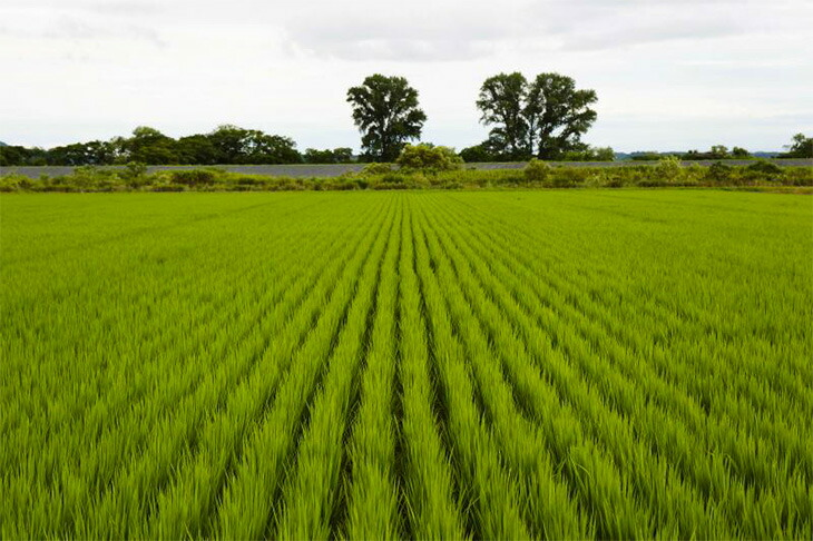 田園風景写真2