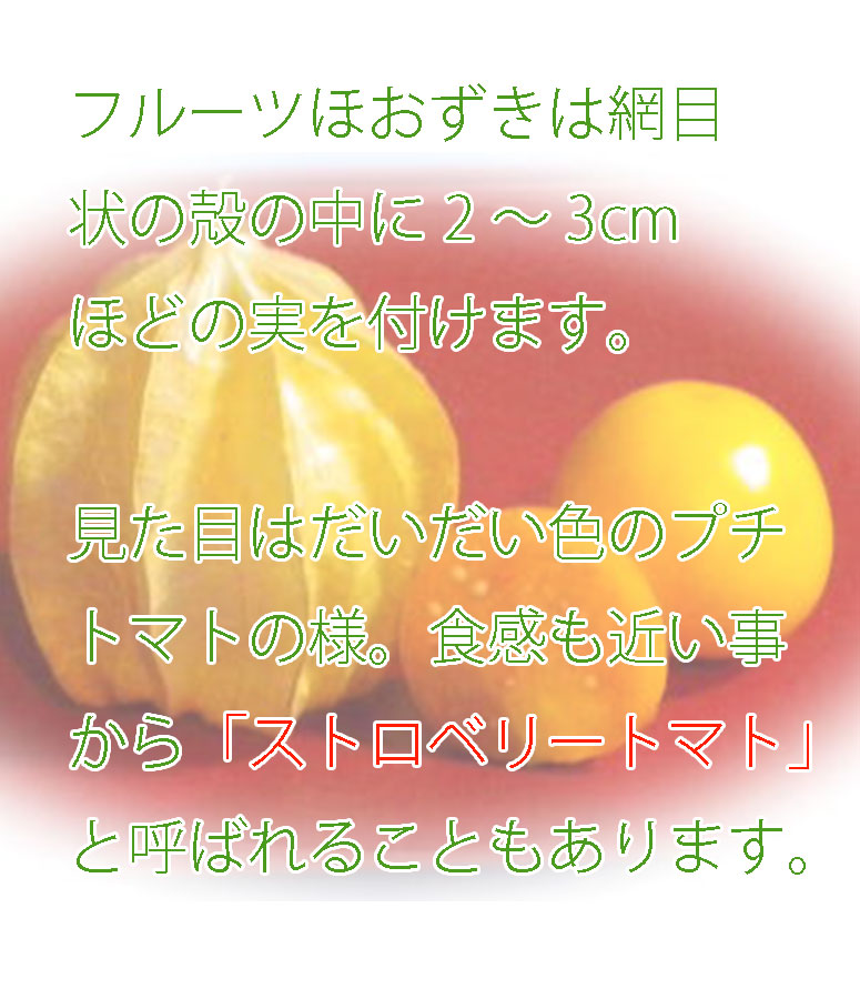 フルーツほおずきはストロベリートマトと呼ばれることもあります