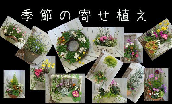 季節の寄せ植え♪One'sな寄せ植えをお楽しみ下さい