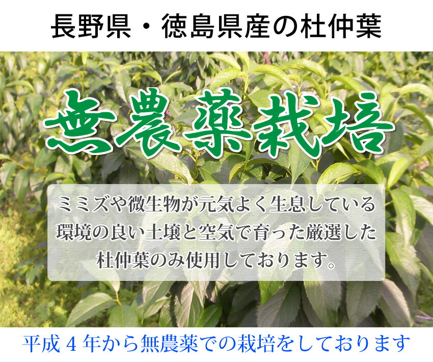 杜仲茶は無農薬
