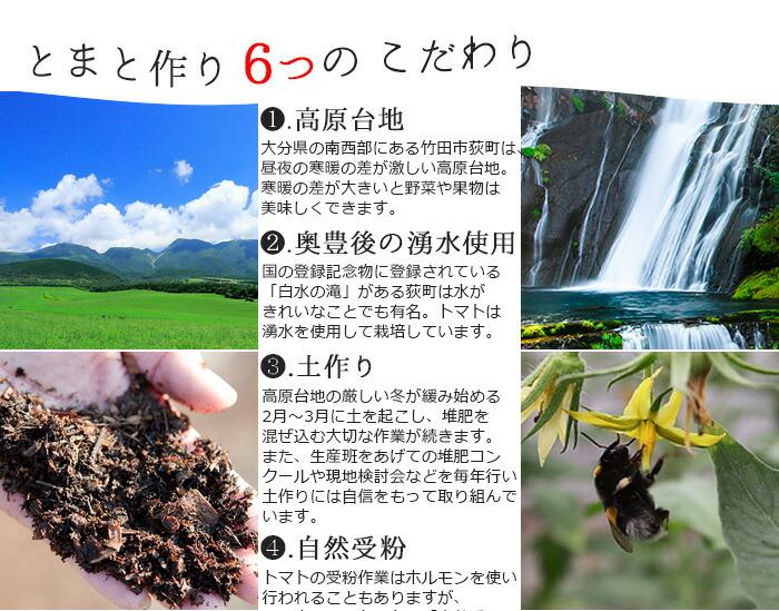1.高原台地 大分県の南西部にある竹田市萩町は昼夜の寒暖の差が激しい高原台地。寒暖の差が大きいと野菜や果物はおいしくできます。 2.奥豊後の湧水使用 国の登録記念物に登録されている「白水の滝」がある萩町は水がきれいなことでも有名。 トマトは湧水を使用して栽培しています。 3.土作り 高原台地の厳しい冬が緩み始める2月~3月に土を起こし、堆肥を混ぜ込む大切な作業が続きます。 また、生産班をあげての堆肥コンクールや現地検討会などを毎年行い、土作りには自信をもって取り組んでいます。