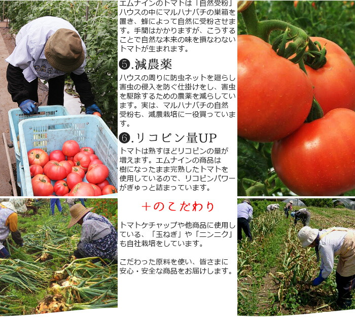 4.自然受粉 トマトの受粉作業はホルモンを使い行われることもありますが、エム・ナインのトマトは「自然受粉」 ハウスの中にマルハナバチの巣箱を置き、蜂によって自然に受粉させます。 手間はかかりますが、こうすることで自然な本来の味を損なわないトマトが生まれます。 5.減農薬 ハウスの周りに防虫ネットを廻らし、害虫の侵入を防ぐ仕掛けをし、害虫を駆除するための農薬を減らしています。 実は、マルハナバチの自然受粉も減農栽培に一役買っています。 6.リコピン量UP トマトは熟すほどリコピン量が増えます。 エム・ナインの商品は樹になったまま完熟したトマトを使用しているので、リコピンパワーがぎゅっと詰まっています。