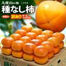 九度山の種なし柿