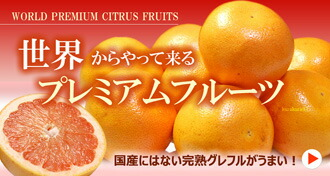 世界の柑橘特集