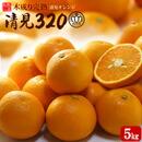 清見オレンジ320
