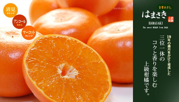 はまさき上級柑橘
