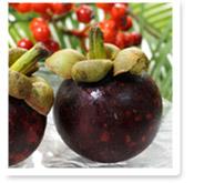 世界三大美果の1つマンゴスチン