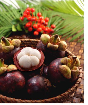 南国トロピカルフルーツのマンゴスチン