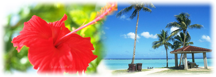 南国トロピカル風景イメージ
