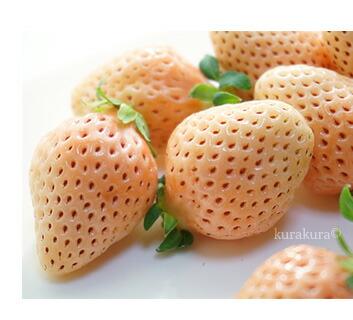 香りに惚れる白イチゴ淡雪