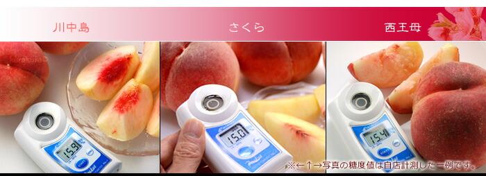 晩生キラキラ桃の糖度一例