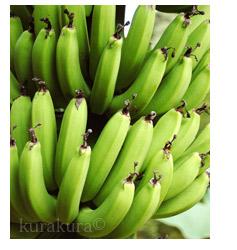 栽培中まだ青いバナナ