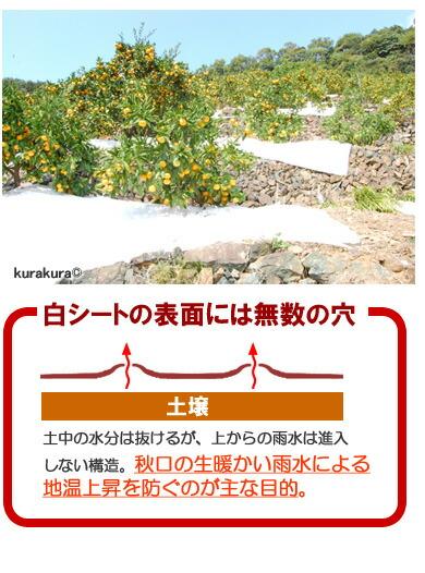 マルチ被覆栽培の役割