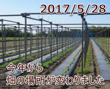 2017/5/28今年から畑の場所が変わりました