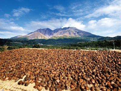 椿油 桜島 オリーブオイル オレイン酸85% 無添加 アトピー 乾燥肌 効果