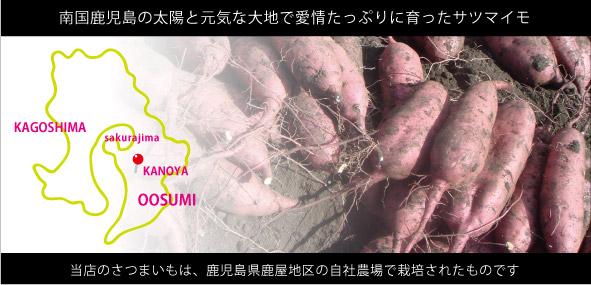 当店のさつまいもは鹿児島県鹿屋地区で栽培されたものです