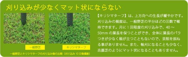 芝生 ベランダ 暑さ対策 緑化 天然芝 テラス コンクリート 人工芝 送料無料手入れ楽 キリシマターフ