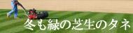 関東以北や寒冷地・内陸にお住まいの方に冬芝のタネ
