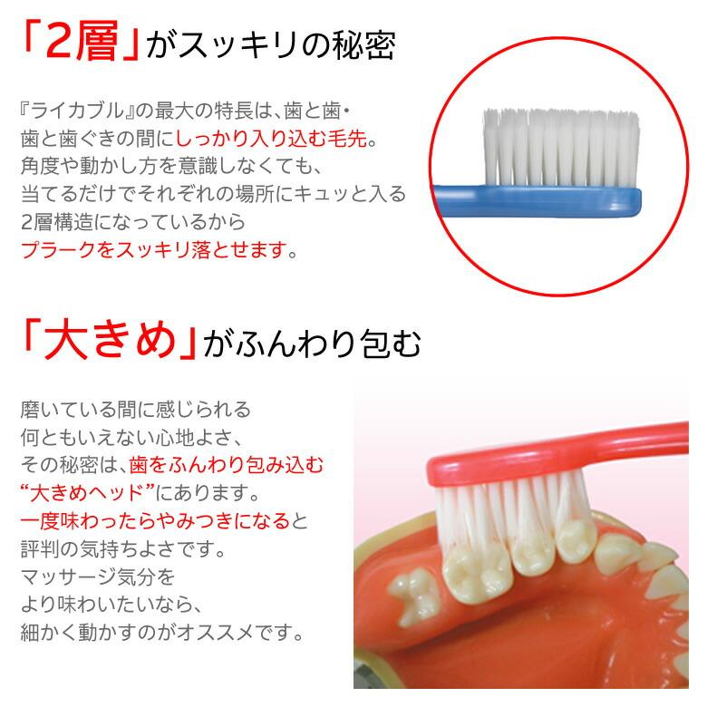 「2層」がスッキリの秘密 歯と歯・歯と歯ぐきの間にしっかり入り込む毛先。「大きめ」がふんわり包む 大きめヘッド、一度味わったらやみつきになります。