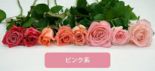 ピンク系色の比較