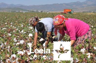 LeelaCOTTON社のオーガニックコットン畑