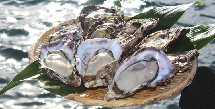 自然豊かな広島湾で育てた殻付きです。