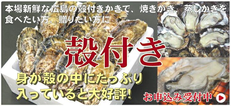 新鮮!ぷりぷり広島産生かき 殻付き牡蠣
