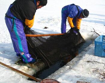 北海道の冬の風物詩氷下魚(こまい コマイ カンカイ)漁