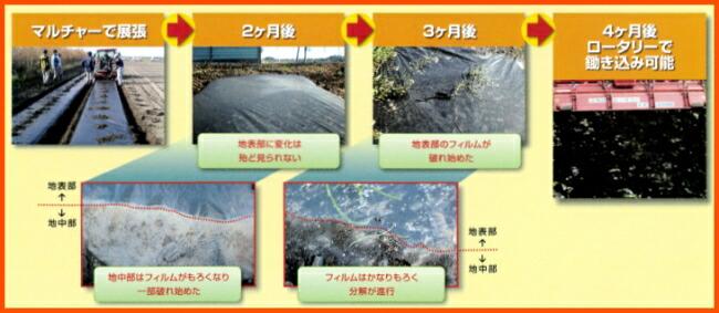 カエルーチの分解過程