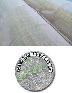 防虫サンサンネットのトンネル栽培使用例