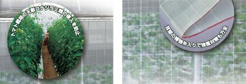 防虫サンサンネットソフライトSL6500の特徴と効果