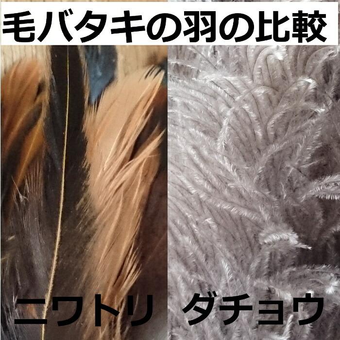 毛バタキの羽の比較画像