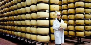 チーズ製造