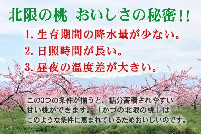秋田産,北限の桃