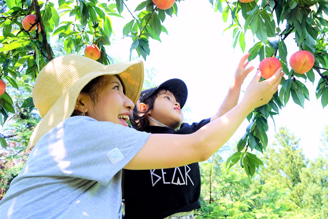秋田県産,北限の桃