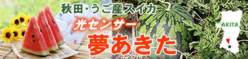 すいか,縞無双(しまむそう),秋田,羽後,西瓜