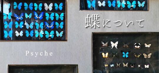 ◆蝶について◆