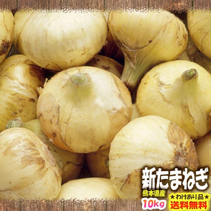 【わけあり】【小玉・分球】【送料無料】熊本県産 新たまねぎ 10kg【サラたま】