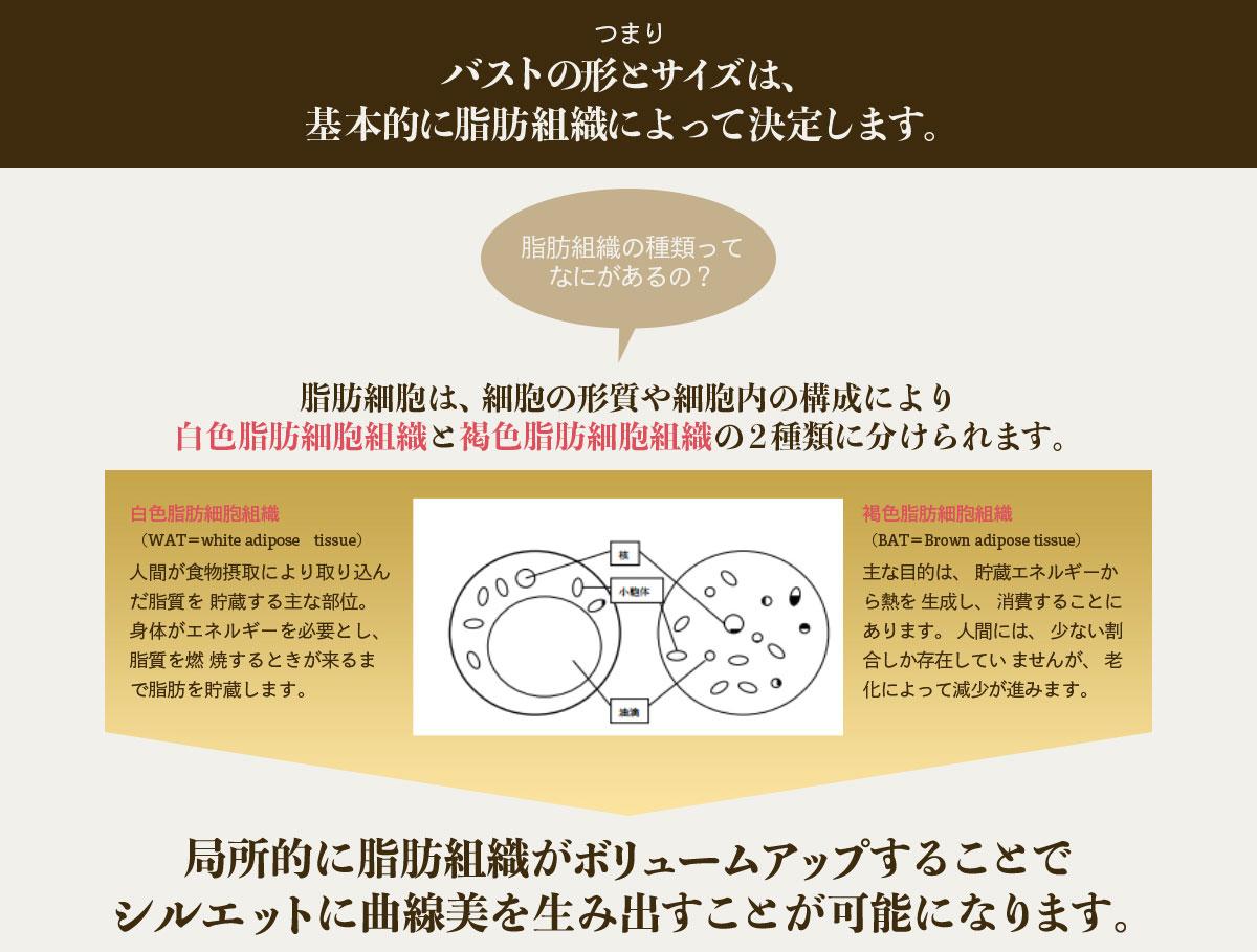 バストの形とサイズは、基本的に脂肪組織によって決定します。
