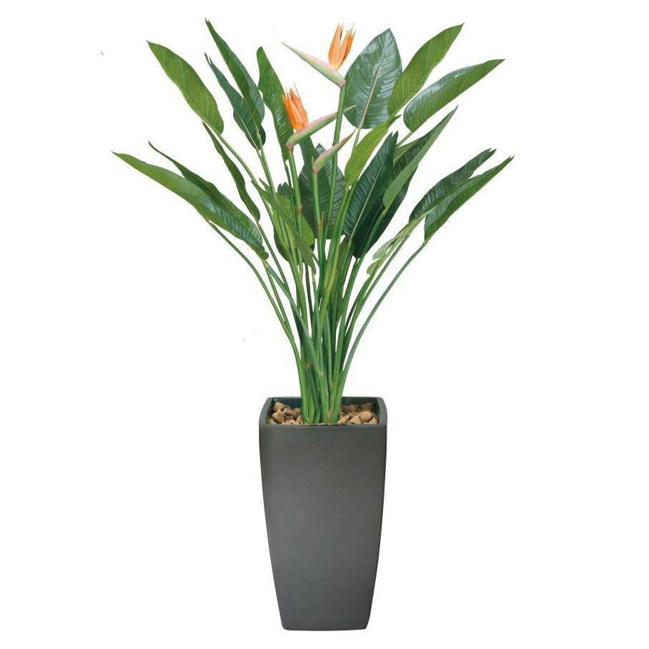 光触媒 光の楽園アートストレチア花付1.8m【インテリアグリーン 人工観葉植物】